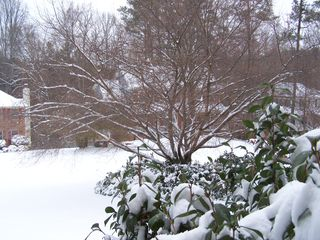 Snow 1-10-2011 005