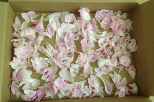 Drying-peonies
